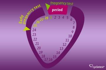 Application cyclotest Pregnancy Test
