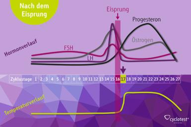 Darstellung des Verlaufs der Hormone FSH, LH, Progesteron und Östrogen sowie der Temperatur in der zweiten Zyklushälfte nach dem Eisprung.