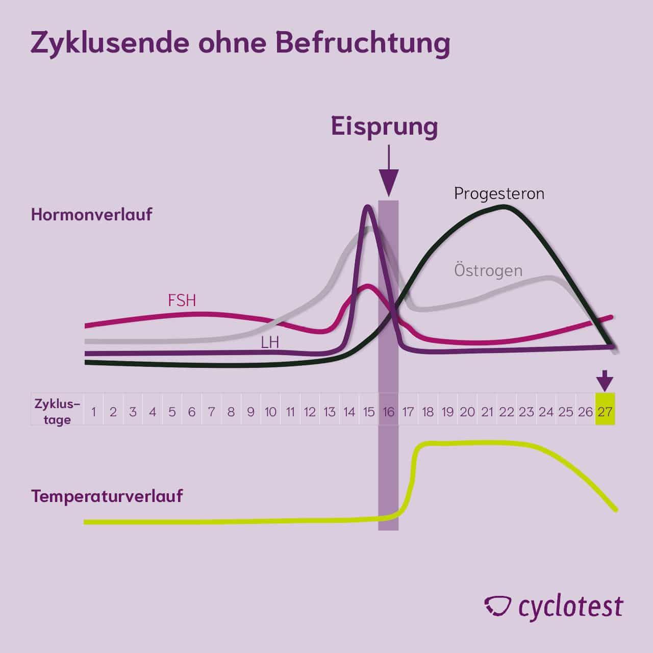Darstellung des Verlaufs der Hormone FSH, LH, Progesteron und Östrogen sowie der Temperatur am Ende des Zyklus, wenn keine Befruchtung stattgefunden hat.