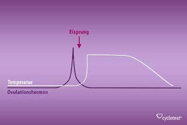 Der Anstieg des Ovulationshormons erfolgt vor dem Anstieg der Temperatur und kann damit den Eisprung voraussagen.