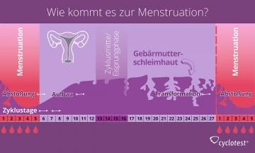 Während der Menstruation wird aus der Gebärmutter Schleimhaut, Sekrete, Eizelle und Blut ausgeschieden.