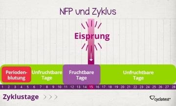 Mit NFP den Zyklus auswerten.