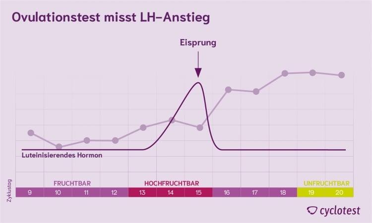 Ein Ovulationstest misst den LH-Anstieg, der dem Eisprung vorausgeht.
