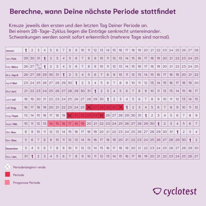 Regelkalender mit normalem Zyklus und Prognose der nächsten Periode