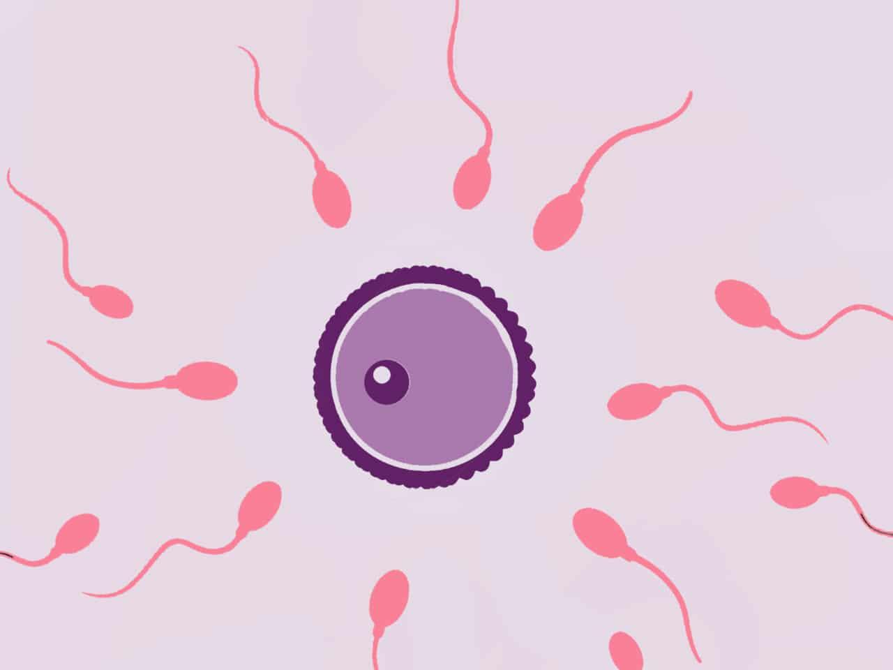 Das Spermium und die Spermienqualität können verbessert werden durch gesunde Ernährung bestehend aus Obst und Gemüse.