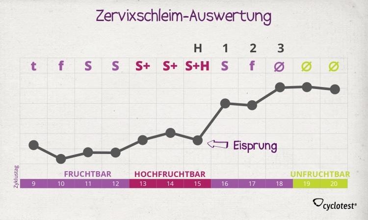 Die Auswertung des Zervixschleims: S+h plus 3 Tage.