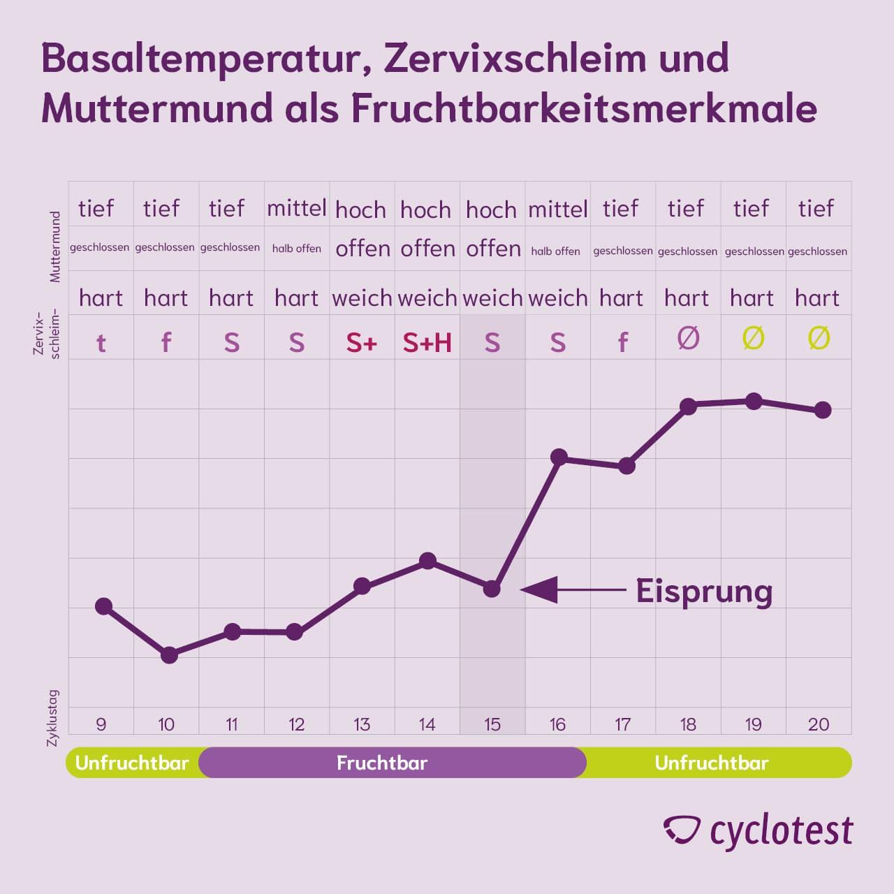 Diagramm zu Basaltemperatur, Zervixschleim und Muttermund als Fruchtbarkeitsmerkmale