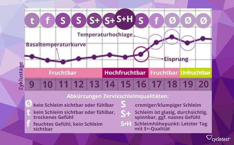 Die Grafik zeigt den Zusammenhang zwischen der Schleimqualität und der Fruchtbarkeit.