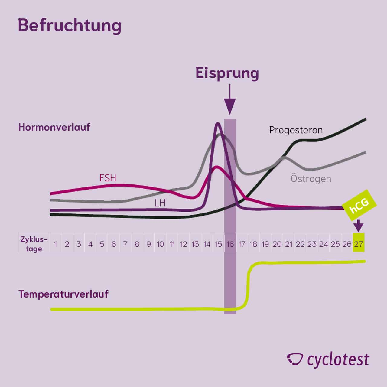 Darstellung des Verlaufs der Hormone FSH, LH, Progesteron und Östrogen sowie der Temperatur während eines Zyklus bei einer Schwangerschaft.